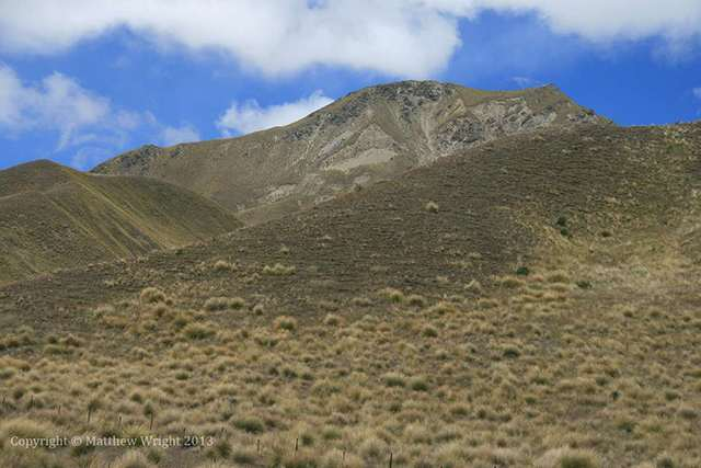 Otago tussock. Distinctive - and means the disbelief, for me, isn't entirely suspended in 'The Two Towers'.