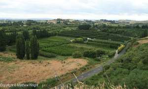 View from Otatara looking southeast - now a wine growing region.