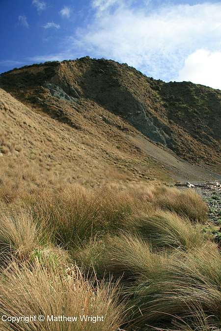 Tussock, Makara Beach, winter 2014.