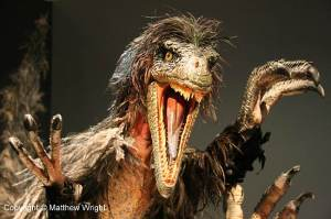 Think Velociraptors were like Jurassic Park? Think again. They were about the size of a large turkey...and looked like this...