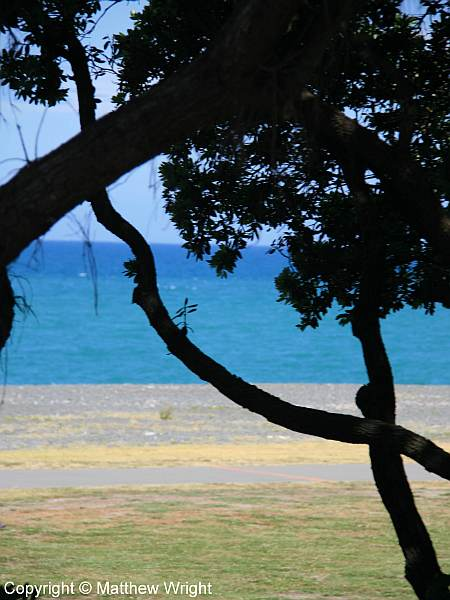Azure seas silhouetted against pohutukawa. A snapshot I took a few weeks back.