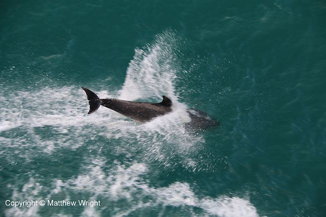 Timing is everything with dolphin photos... I clicked the shutter JUST a fraction of a second too late. But hey...