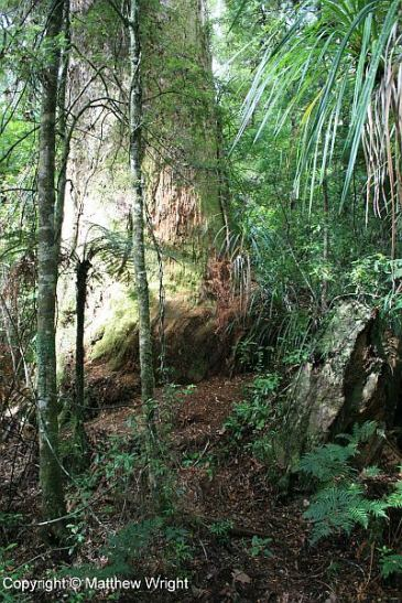 New Zealand bush - temperate jungle that's changed little since the dinosaur age (which, really, didn't end here until around the fourteenth century CE).