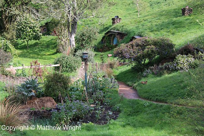 Hobbit holes on the Hobbiton Movie Set.