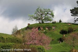 The Hill on the Hobbiton Movie Set.