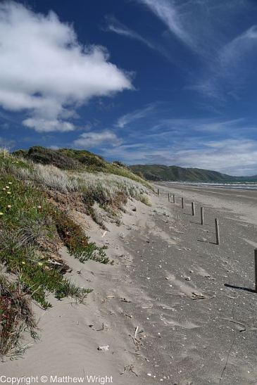 Dunes on Paraparaumu beach.